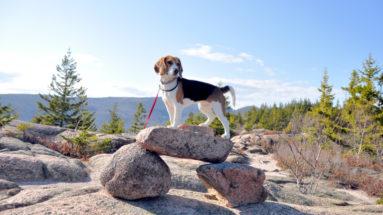 Dixie Acadia National Park