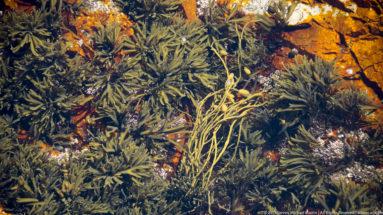 Acadia National Park Crashing Waves Seaweed