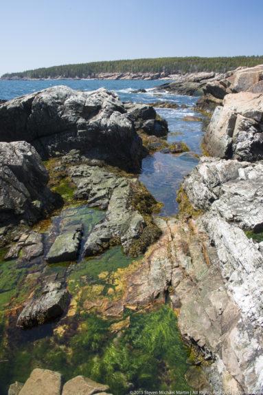 Acadia National Park Seaweed