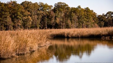 Salt marshes along Jamestown Island by Steven Michael Martin at album.us.com