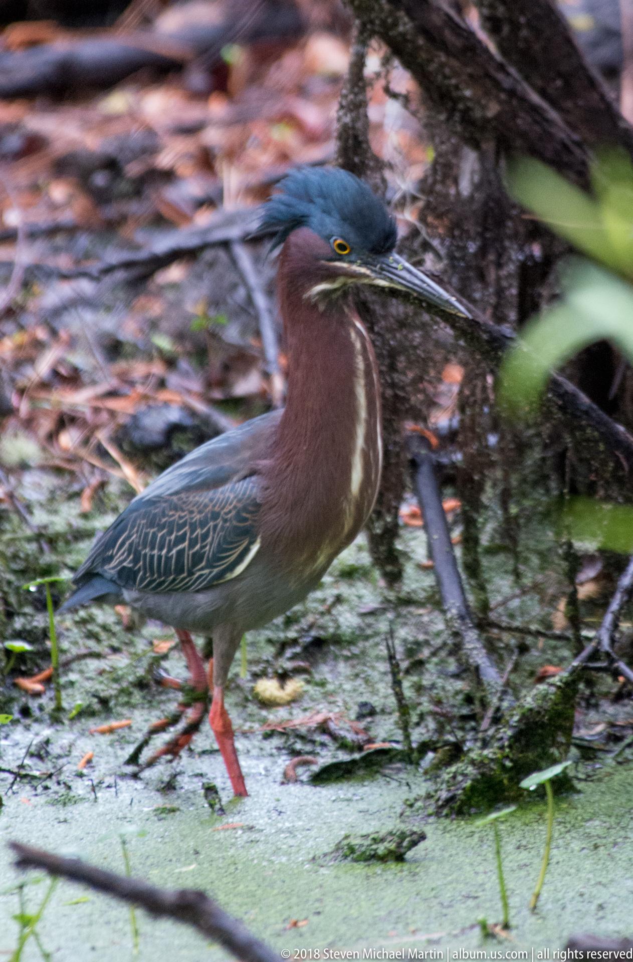 SMartin_2018 Charleston Audubon (51 of 106)