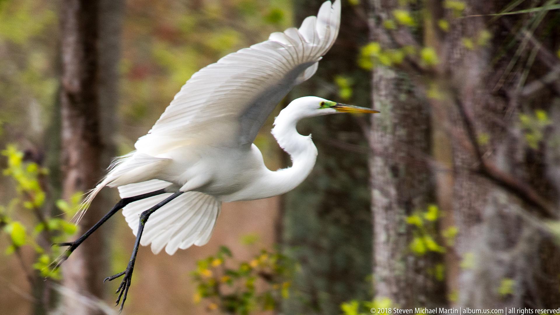 SMartin_2018 Charleston Audubon (55 of 106)