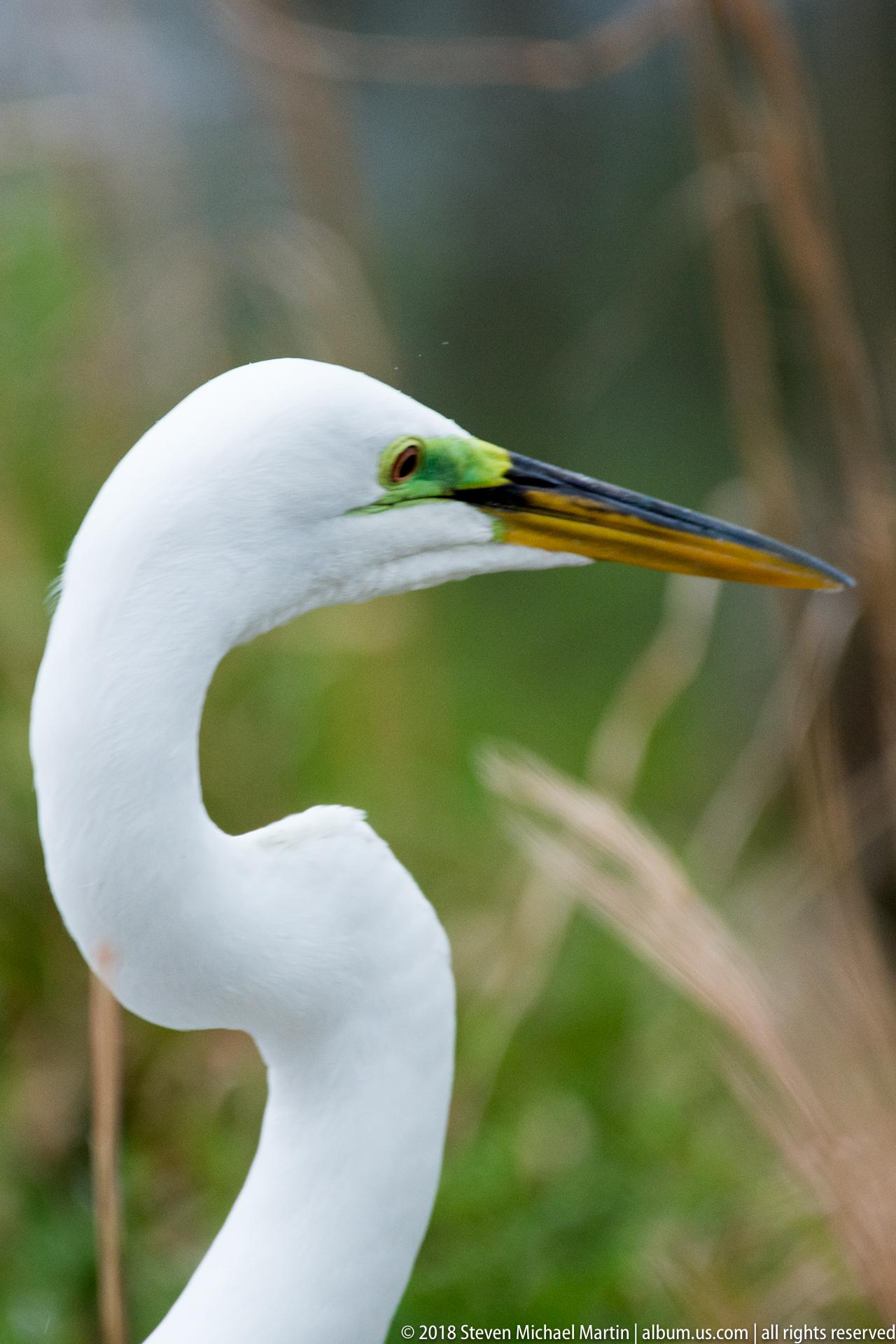 SMartin_2018 Charleston Audubon (71 of 106)
