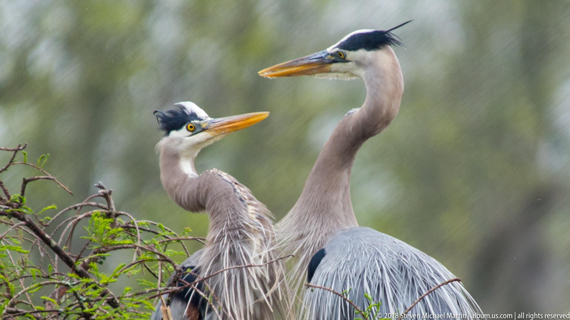 SMartin_2018 Charleston Audubon (93 of 106)