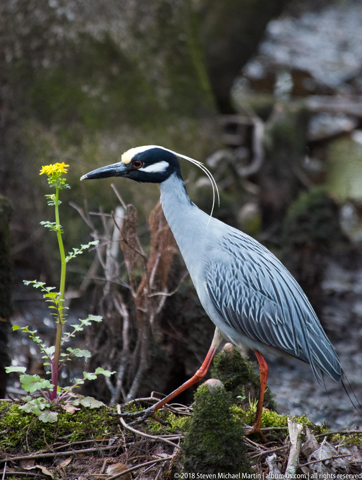 SMartin_2018 Biedler Forest (39 of 91)